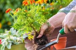 Bí quyết trồng và chăm sóc cây cảnh để bàn đúng cách nhất
