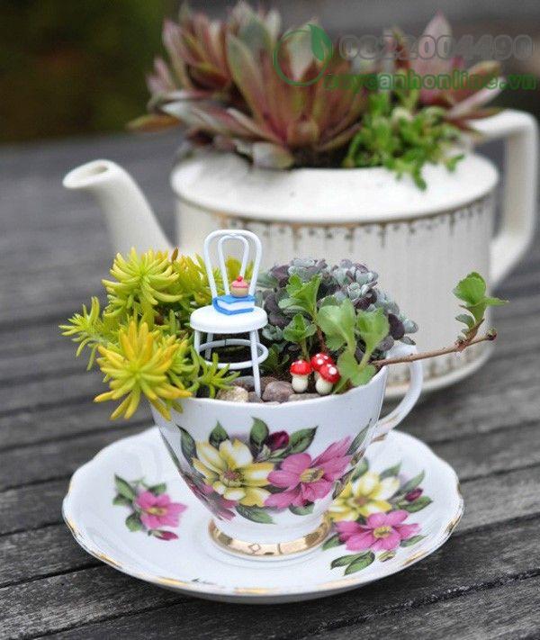 Cách làm khu vườn mini trong tách trà cho góc nhà thêm xinh