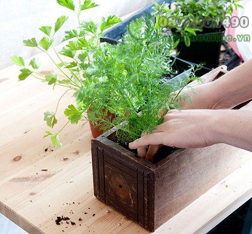 Mách bạn cách giữ ẩm cho đất trồng cực hay và đơn giản