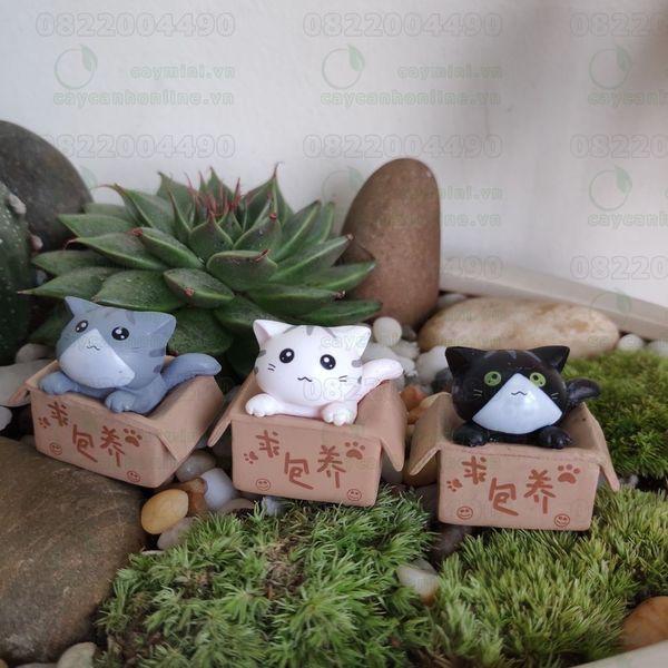 Mèo Trong Hộp