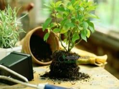 Dịch vụ thay đất và chậu cây