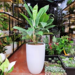 Cây xanh nào trồng trong nhà phát triển tốt