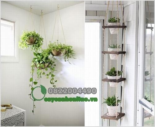 Bố trí cây xanh trong nhà