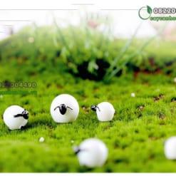 Cừu Béo phụ kiện tiểu cảnh