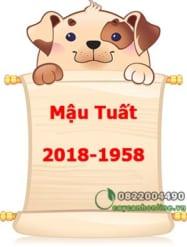Mậu Tuất sinh năm 1958 và 2018 chọn cây cảnh để bàn nào hợp mệnh hợp tuổi?