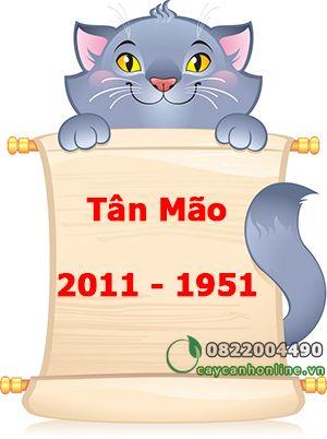 Tuổi Tân Mão sinh năm 1951 – 2011 chọn cây phong thủy để bàn nào?