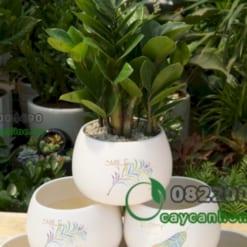 Chậu trồng cây cảnh in hình chữ lucky