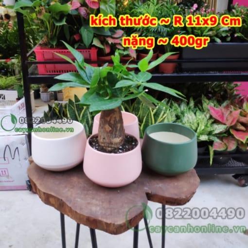 Chậu trồng cây gốm sứ