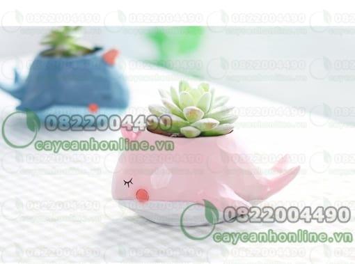 Chậu composite hình cá voi trồng cây sen đá mini