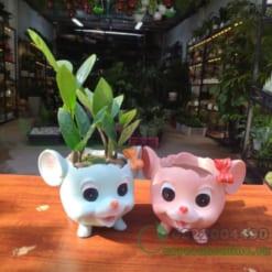 Chậu trồng cây hình chuột