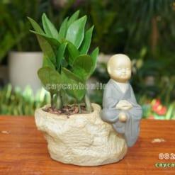 Chậu phật trồng cây cảnh để bàn