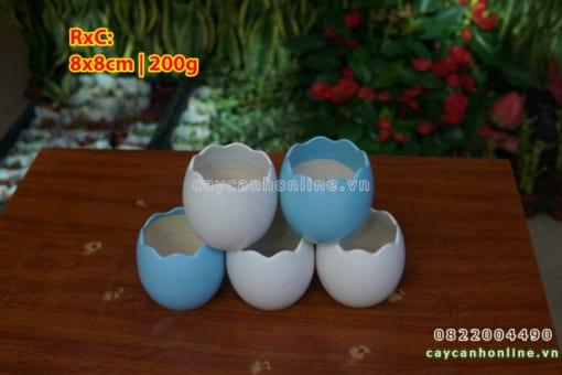Chậu trứng mini