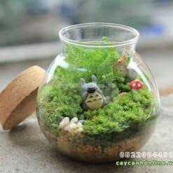 Rêu trang trí cây trong bình thủy tinh