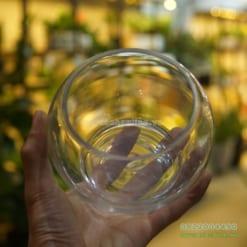 bình thủy tinh trồng cây kim ngân thủy sinh