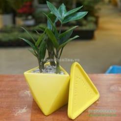 Chậu tam giác trồng cây để bàn kèm đĩa lót