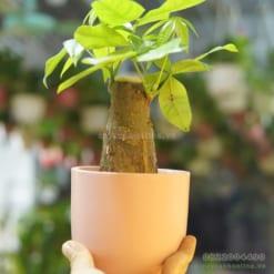 chậu trồng cây đẹp